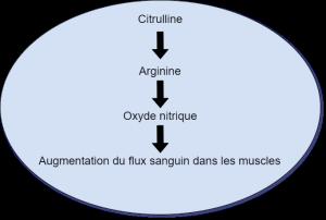 Schéma explicatif montrant le lien entre citrulline, oxyde nitrique et augmentation du flux sanguin